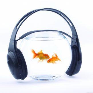 Животные различают музыку композиторов