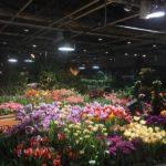 Камерный концерт «Цветущая классика» пройдет в «Аптекарском огороде»