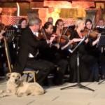 Лабрадор на концерте Венского камерного оркестра