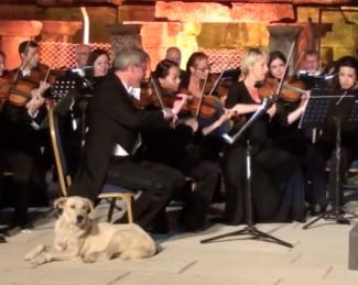 Лабрадор на концерте Венского камернго оркестра