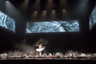 Балет «Тюль» – драма из балетной жизни. Фото - Карина Житкова