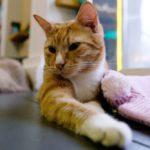 Эрмитажный кот дебютировал в Филармонии Петербурга