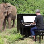 Пианист Пол Бартон приезжает со своим фортепиано в так называемую «Долину смерти», куда приходят доживать последние дни пожилые слоны.