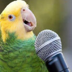 Старушка научила попугая петь оперные арии назло соседям