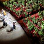 flowers2 150x150 - В оперном театре Барселоны прошел концерт для 2292 комнатных растений