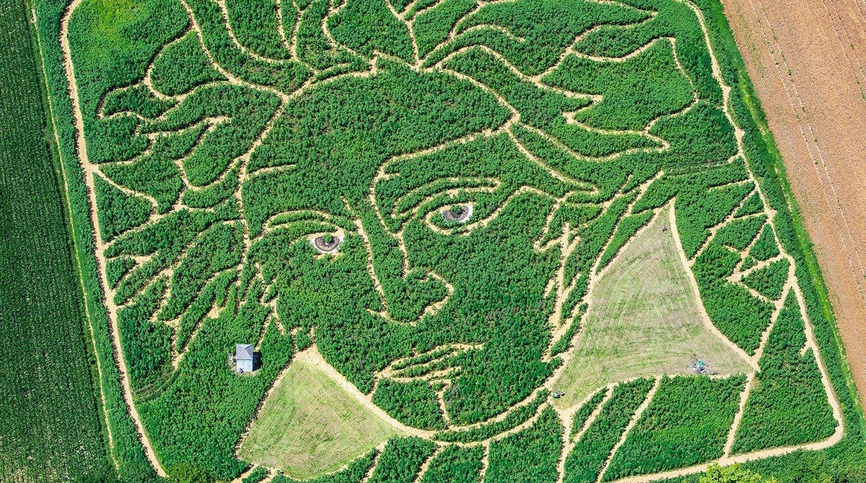 В Германии на поле подсолнухов появился портрет Бетховена