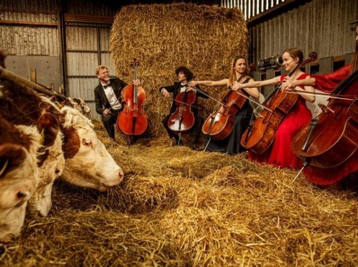 Школа виолончели на природе